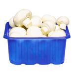 Champignon 250 gram per doos